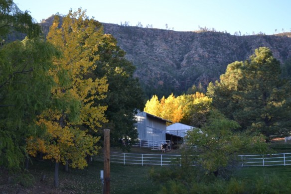 Mountain Ridge Cabins | A serene retreat in the cool pines